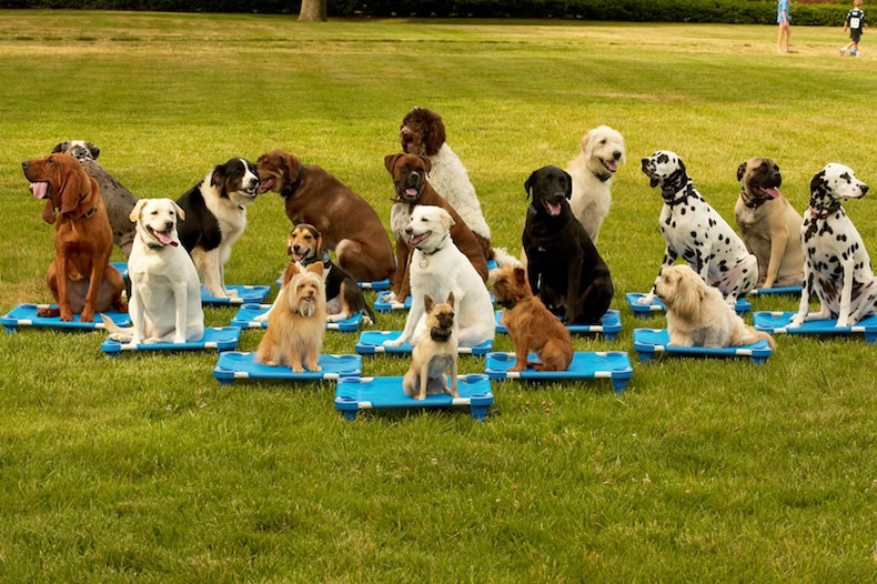 Dog Training Centre